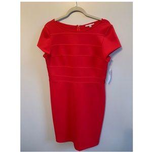 BRAND NEW- SANDRA DARREN DRESS- women's size 12
